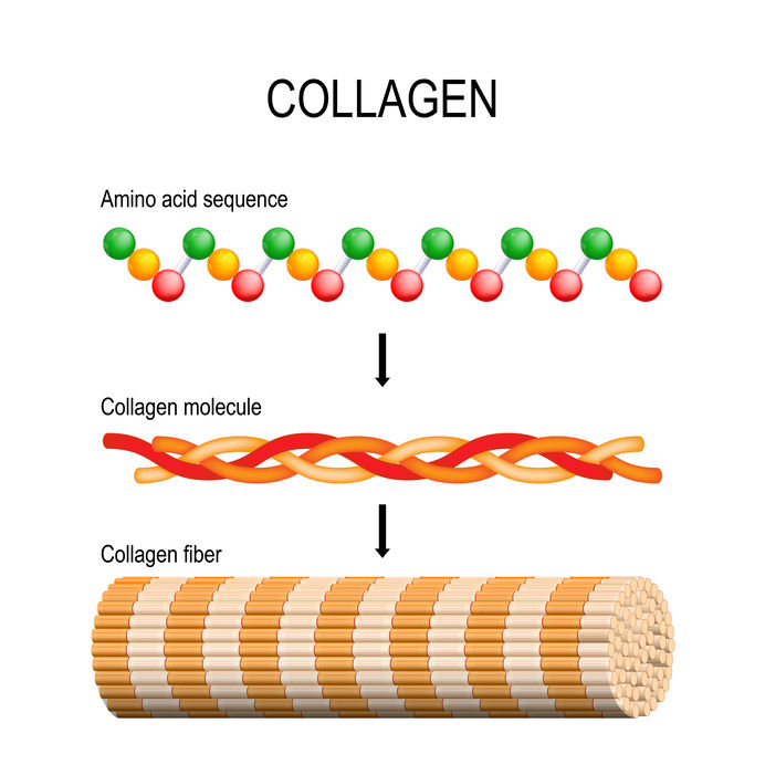 Hydrolyzed Collagen Protein from Biotics Research