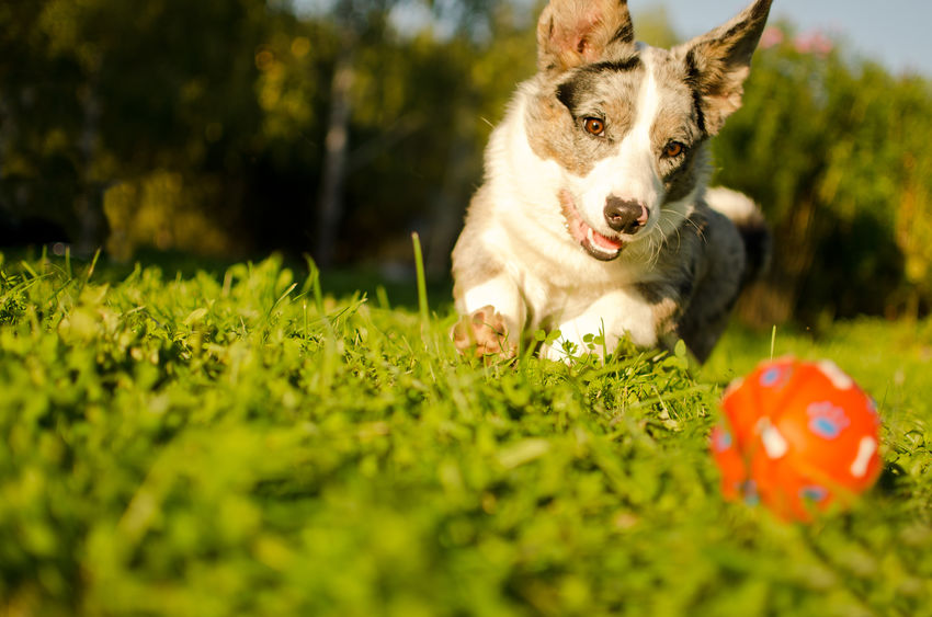Nutritional Supplements for Your Dog from Standard Process
