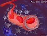 CYREX ARRAY 20 - BLOOD BRAIN BARRIER PERMEABILITY (INCLUDES DOCTOR'S CONSULTATION ON ALL TEST RESULTS)